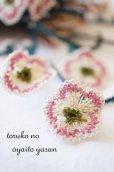 画像2: ●オデミシュ●イーネオヤのお花 1個 (2)